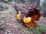 Colorful Fungus near Big Meadow
