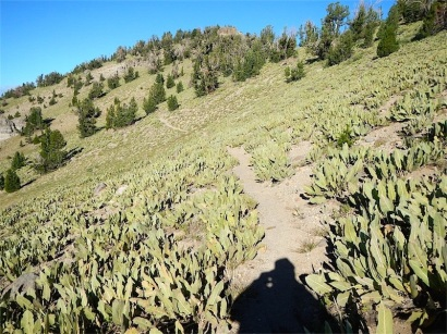 Mule's Ears Meadow to Mt. Baldy