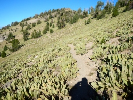 Mule's Ear on Sloping Trail