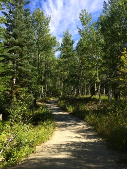 Quaking Aspen, Tunnel Creek Road