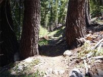 Large trees frame the trail