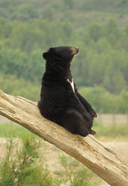 Yoga Bear...Ommmmm