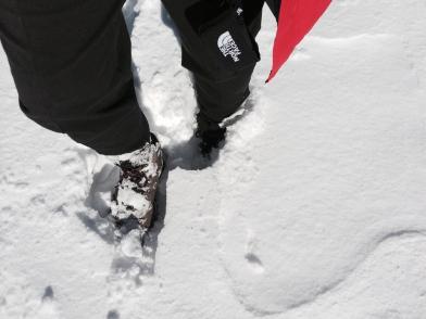 Knee deep in snow