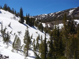 Below Tamarack Peak