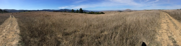 Bolinas Ridge and Tomales Bay