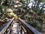 Bridge on Matt Davis Trail
