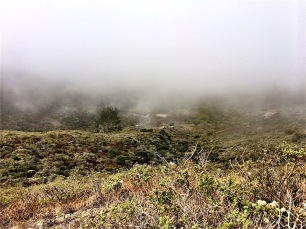 Fog in Rodeo Valley from SCA Trail