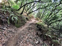 Dipsea Trail up to Panoramic Highway