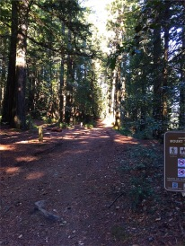 Redwood shaded trail to Bolinas Ridge