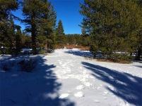 Powdery path back