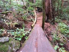 Timber planking across ravine on Ben Johnson Trail