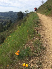 Sun Trail running above the Dipsea Trail
