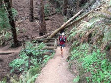 Runner coming up the Lost Trail