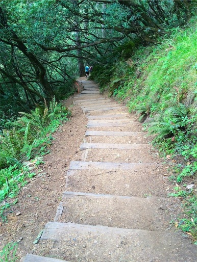 Steep steps on Ocean View Trail