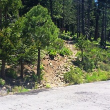 Ward Creek Road Trailhead to Page Meadows and Tahoe City